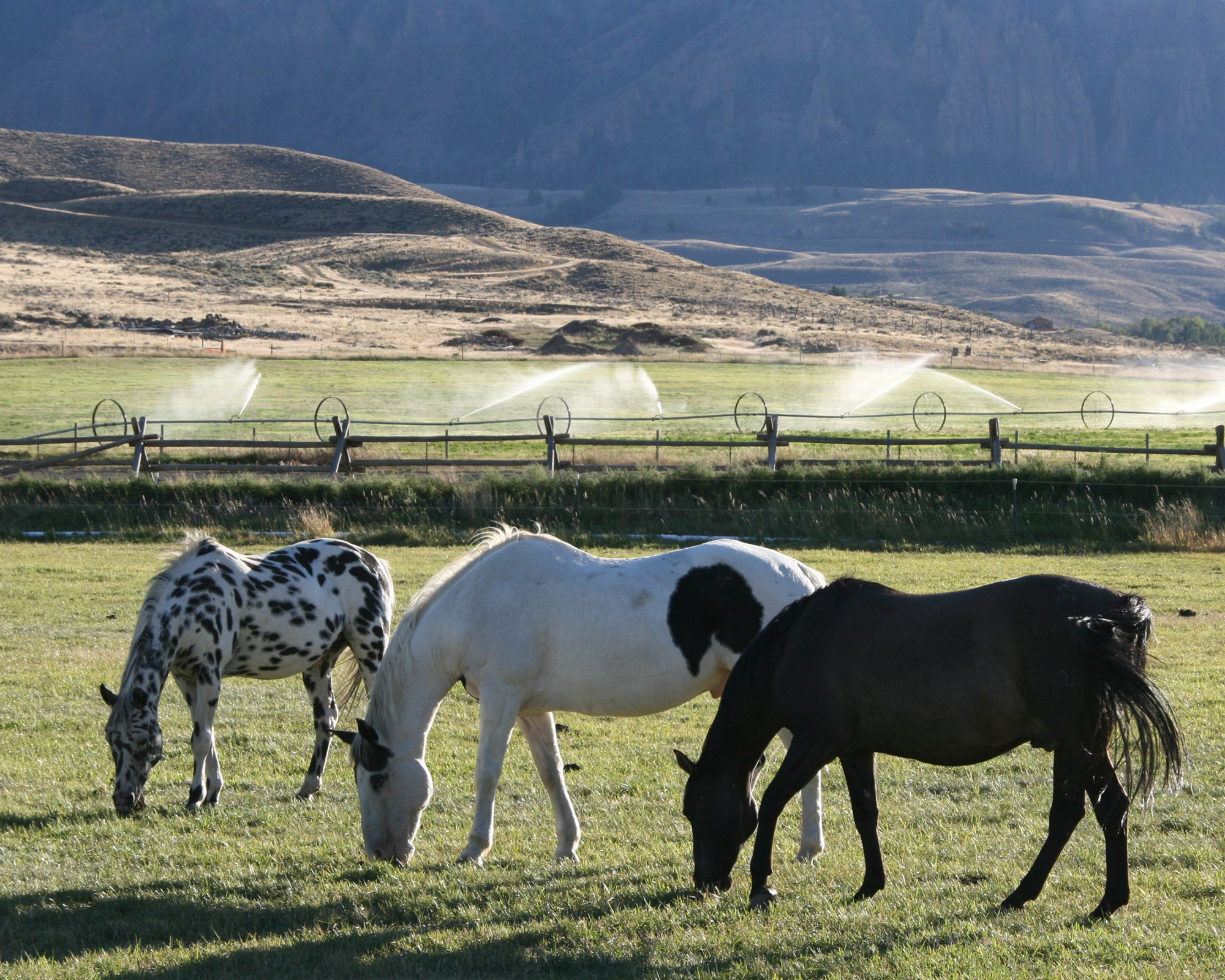 Photo of three horses grazing in a large open fenced in field.