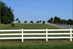 Photo of horse in large fenced grass pasture