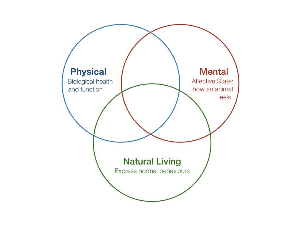 """Three intersecting circles. One is labeled """"Physical: Biological healthand function"""", the second is labeled, """"Mental • Affective State: how an animal feels"""" and the third is labelled, """"Natural Living: Express normal behaviours."""""""
